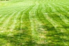 Gjord randig nytt mejad trädgårds- gräsmatta arkivfoto
