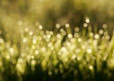 Gjord suddig bakgrund av gräs i ängen, bokeh på solnedgångljus arkivfoto