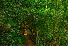 Gjord suddig bakgrund, landskap - guld- bana till och med den gröna skogen royaltyfri foto