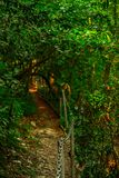 Gjord suddig bakgrund, landskap - guld- bana till och med den gröna skogen arkivfoto