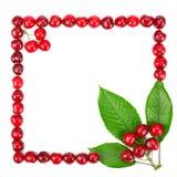 gjorda leaves för Cherryramgreen Fotografering för Bildbyråer