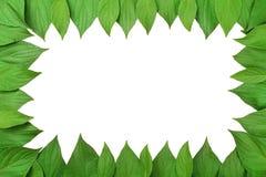 gjorda ramgreenleaves Arkivbilder