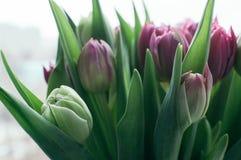 Gjorde suddig nya blommor för vår den abstrakta bakgrunden fotografering för bildbyråer