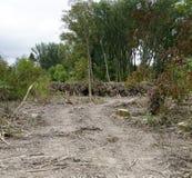 Gjort klar område av en strand- skog arkivbild