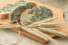 Gjuta att växa snabbt på mögligt bröd i gröna och vita spor royaltyfri foto