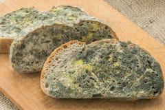 Gjuta att växa snabbt på mögligt bröd i gröna och vita spor arkivfoton