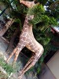 Gjuta giraffet royaltyfri fotografi