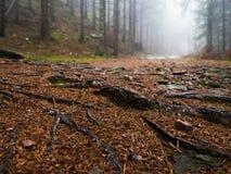 Gjuta i den svarta skogen för dimma royaltyfria bilder