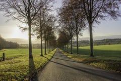 Gjuta skuggor till och med trädtunnelen Dorset Arkivbild