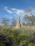 gjuta termiten Arkivbilder