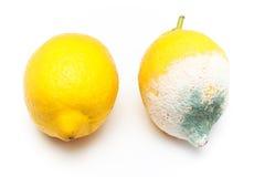 Gjuten och ny citron royaltyfri foto