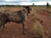 Glückliches Hund-†‹â€ ‹, das unter dem Boden nahe einem Vulkan geht lizenzfreies stockbild