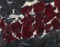 Glänsande cinnabaråder Arkivbild