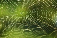 Glänsande vattendroppar på spiderweb Arkivfoton