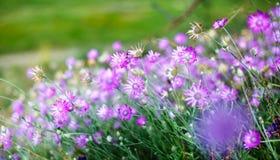 Glänta av blommor Arkivfoton