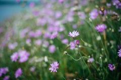 Glänta av blommor Royaltyfria Bilder