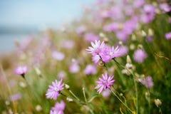 Glänta av blommor Fotografering för Bildbyråer