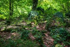 Glänta i den tropiska skogen royaltyfria foton