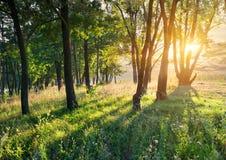 Glänta i skogen Arkivbild