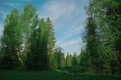 Glänta i skogmorgonbjörken, säsong Arkivfoto