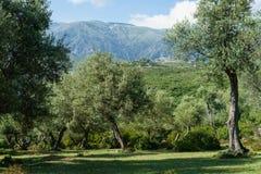 Glänta nära Dhermi Albanien Royaltyfri Foto