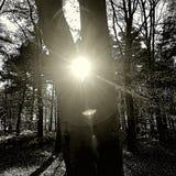 Glänzen durch die Bäume Lizenzfreie Stockfotografie