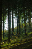Glänzende Bäume lizenzfreie stockfotografie