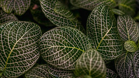 Glänzende Blätter Lizenzfreie Stockfotografie