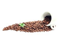 Glänzende frische Röstkaffeebohnen mit dem cuo und Blatt lokalisiert auf w Lizenzfreie Stockfotografie