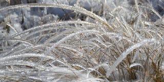 Glänzende Grashalme in Frost Lizenzfreies Stockfoto