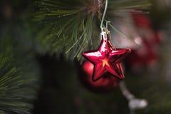 Glänzende rote Sternweihnachtsdekoration, die an der grünen Kiefer hängt Stockbilder