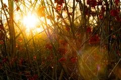 Glänzende Sonne Stockbild