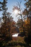 Glänzende Sonne gesprengt im Baum Stockbild