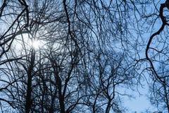 Glänzende Sonne mit Blendenfleck in den bloßen Baumschattenbildern Lizenzfreies Stockbild