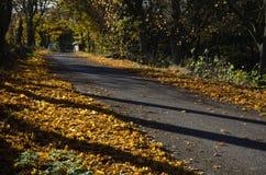 Glänzende Straße Stockfoto