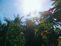 Glänzende Sun-Blume im Himmel stockfoto