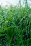 Glänzende Tau-Tropfen auf Spinnen-Netz Stockfotos
