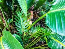 glänzende tropische Dschungelanlage in der Blüte lizenzfreie stockbilder