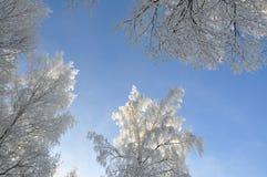 Glänzende Zweige Stockfoto