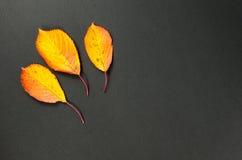 Glänzender Herbstlaub Lizenzfreies Stockfoto