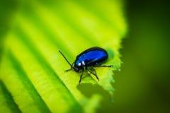 Glänzender Käfer Stockfotografie