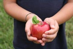 Glänzender roter Apfel mit dem Blatt angehalten in den Händen eines Kindes stockfotos
