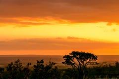 Glänzender Sonnenuntergang auf dem Savanns in Brasilien Stockbild