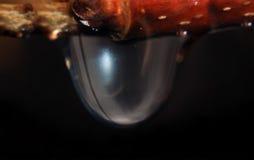 Glänzender Tropfen des abstrakten Wassersilbers auf Niederlassung Lizenzfreie Stockfotografie
