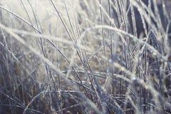 Glänzender und fabelhafter Frost Lizenzfreie Stockfotos