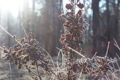 Glänzender und fabelhafter Frost Lizenzfreie Stockfotografie