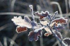 Glänzender und fabelhafter Frost Lizenzfreies Stockbild