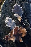 Glänzender und fabelhafter Frost Stockbilder
