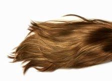 Glänzendes gesundes menschliches langes Haar des natürlichen Höhepunktes Erweiterung und Perücke lizenzfreie stockfotografie
