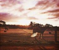 Glänzendes Pferd Lizenzfreies Stockbild